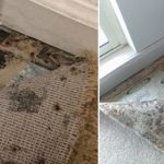 kangaroo-cleaning-services-carpet-cleaning-sydney_4